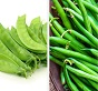 Peas and French Bean